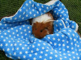 guinea pig holiday boarding and grooming hotel Picture